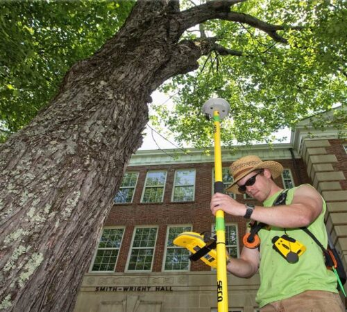 Arborist Consultations-Haines City FL Tree Trimming and Stump Grinding Services-We Offer Tree Trimming Services, Tree Removal, Tree Pruning, Tree Cutting, Residential and Commercial Tree Trimming Services, Storm Damage, Emergency Tree Removal, Land Clearing, Tree Companies, Tree Care Service, Stump Grinding, and we're the Best Tree Trimming Company Near You Guaranteed!