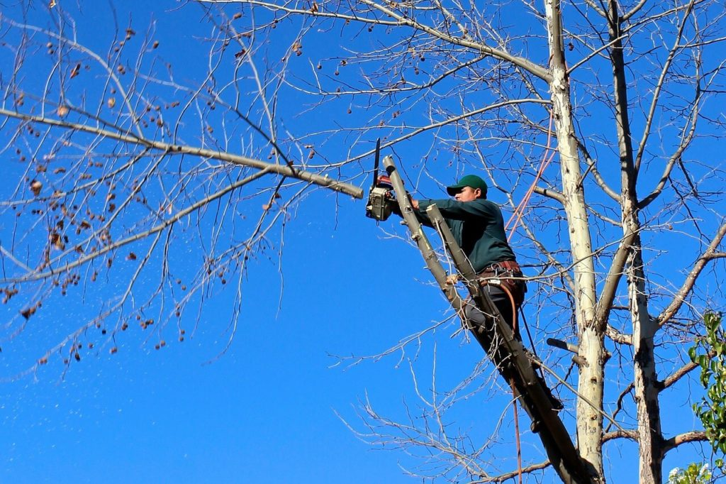 Contact Us-Haines City FL Tree Trimming and Stump Grinding Services-We Offer Tree Trimming Services, Tree Removal, Tree Pruning, Tree Cutting, Residential and Commercial Tree Trimming Services, Storm Damage, Emergency Tree Removal, Land Clearing, Tree Companies, Tree Care Service, Stump Grinding, and we're the Best Tree Trimming Company Near You Guaranteed!
