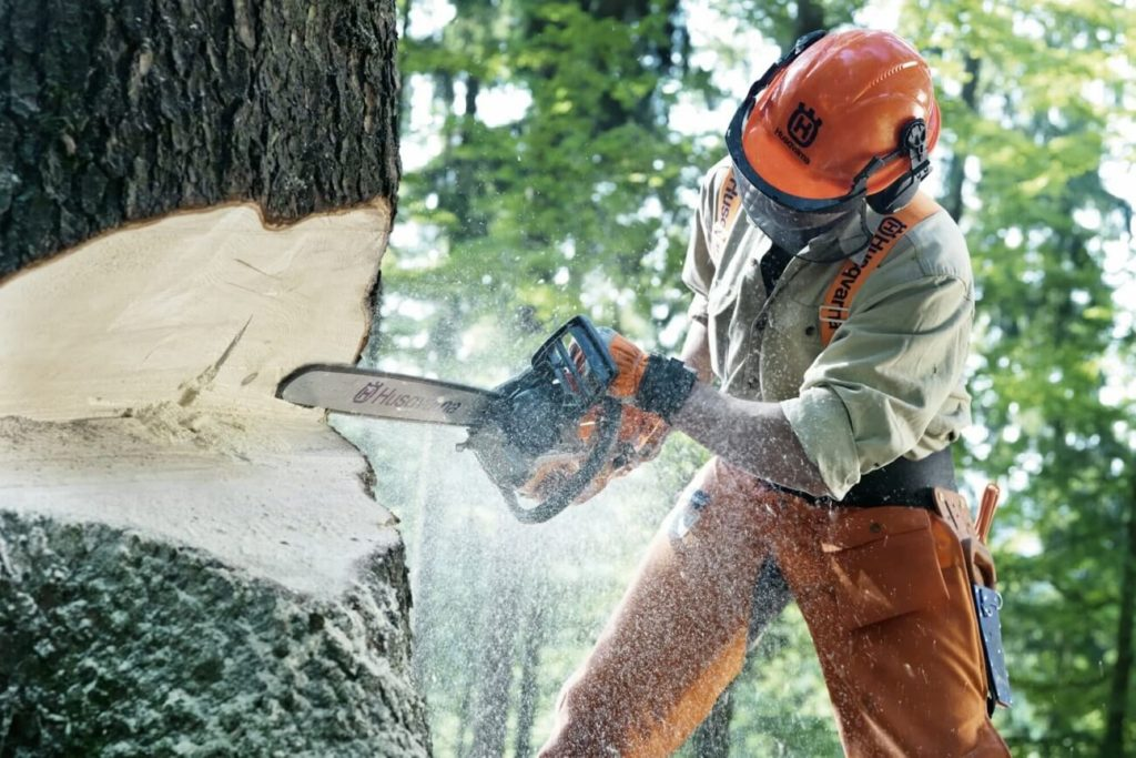 Haines City FL Tree Trimming and Stump Grinding Services Home Page Image-We Offer Tree Trimming Services, Tree Removal, Tree Pruning, Tree Cutting, Residential and Commercial Tree Trimming Services, Storm Damage, Emergency Tree Removal, Land Clearing, Tree Companies, Tree Care Service, Stump Grinding, and we're the Best Tree Trimming Company Near You Guaranteed!
