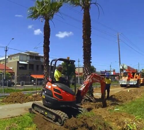 Palm Tree Removal-Haines City FL Tree Trimming and Stump Grinding Services-We Offer Tree Trimming Services, Tree Removal, Tree Pruning, Tree Cutting, Residential and Commercial Tree Trimming Services, Storm Damage, Emergency Tree Removal, Land Clearing, Tree Companies, Tree Care Service, Stump Grinding, and we're the Best Tree Trimming Company Near You Guaranteed!