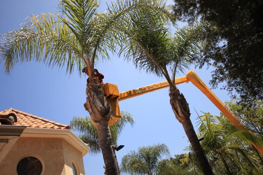 Palm Tree Trimming-Haines City FL Tree Trimming and Stump Grinding Services-We Offer Tree Trimming Services, Tree Removal, Tree Pruning, Tree Cutting, Residential and Commercial Tree Trimming Services, Storm Damage, Emergency Tree Removal, Land Clearing, Tree Companies, Tree Care Service, Stump Grinding, and we're the Best Tree Trimming Company Near You Guaranteed!