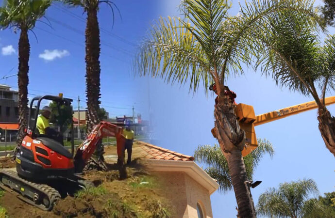 Palm tree trimming & palm tree removal-Haines City FL Tree Trimming and Stump Grinding Services-We Offer Tree Trimming Services, Tree Removal, Tree Pruning, Tree Cutting, Residential and Commercial Tree Trimming Services, Storm Damage, Emergency Tree Removal, Land Clearing, Tree Companies, Tree Care Service, Stump Grinding, and we're the Best Tree Trimming Company Near You Guaranteed!