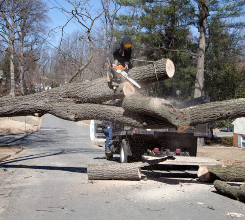 Residential Tree Services-Haines City FL Tree Trimming and Stump Grinding Services-We Offer Tree Trimming Services, Tree Removal, Tree Pruning, Tree Cutting, Residential and Commercial Tree Trimming Services, Storm Damage, Emergency Tree Removal, Land Clearing, Tree Companies, Tree Care Service, Stump Grinding, and we're the Best Tree Trimming Company Near You Guaranteed!