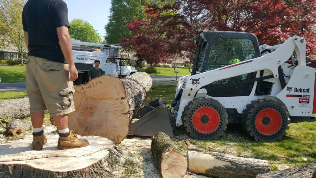Services-Haines City FL Tree Trimming and Stump Grinding Services-We Offer Tree Trimming Services, Tree Removal, Tree Pruning, Tree Cutting, Residential and Commercial Tree Trimming Services, Storm Damage, Emergency Tree Removal, Land Clearing, Tree Companies, Tree Care Service, Stump Grinding, and we're the Best Tree Trimming Company Near You Guaranteed!