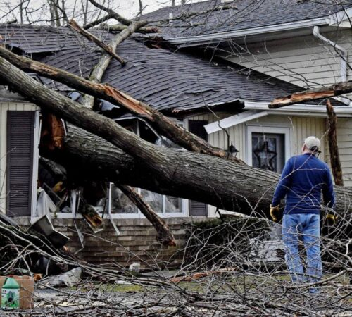 Storm Damage-Haines City FL Tree Trimming and Stump Grinding Services-We Offer Tree Trimming Services, Tree Removal, Tree Pruning, Tree Cutting, Residential and Commercial Tree Trimming Services, Storm Damage, Emergency Tree Removal, Land Clearing, Tree Companies, Tree Care Service, Stump Grinding, and we're the Best Tree Trimming Company Near You Guaranteed!