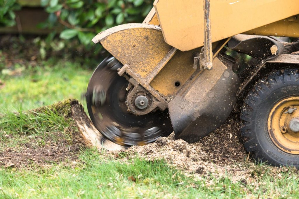 Stump Grinding-Haines City FL Tree Trimming and Stump Grinding Services-We Offer Tree Trimming Services, Tree Removal, Tree Pruning, Tree Cutting, Residential and Commercial Tree Trimming Services, Storm Damage, Emergency Tree Removal, Land Clearing, Tree Companies, Tree Care Service, Stump Grinding, and we're the Best Tree Trimming Company Near You Guaranteed!
