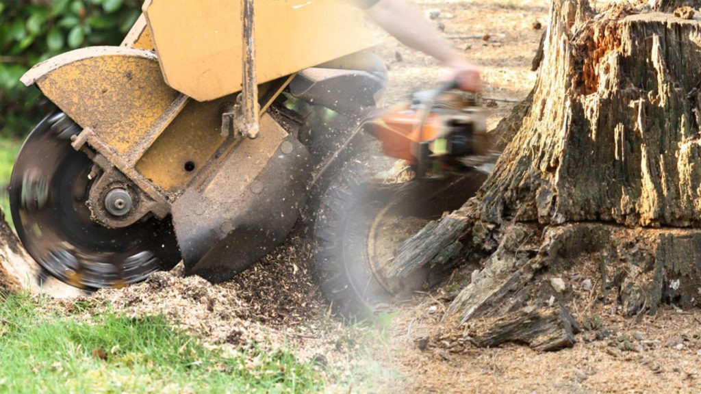 Stump grinding & removal-Haines City FL Tree Trimming and Stump Grinding Services-We Offer Tree Trimming Services, Tree Removal, Tree Pruning, Tree Cutting, Residential and Commercial Tree Trimming Services, Storm Damage, Emergency Tree Removal, Land Clearing, Tree Companies, Tree Care Service, Stump Grinding, and we're the Best Tree Trimming Company Near You Guaranteed!