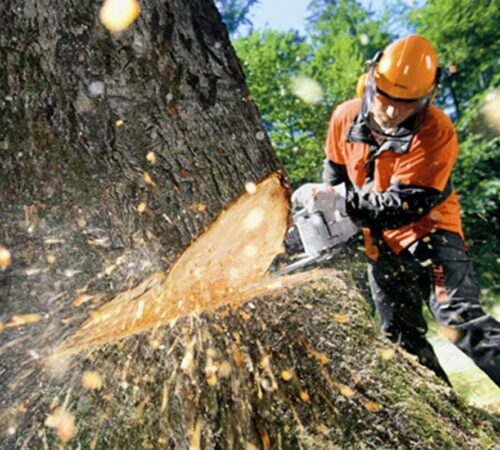 Tree Cutting-Haines City FL Tree Trimming and Stump Grinding Services-We Offer Tree Trimming Services, Tree Removal, Tree Pruning, Tree Cutting, Residential and Commercial Tree Trimming Services, Storm Damage, Emergency Tree Removal, Land Clearing, Tree Companies, Tree Care Service, Stump Grinding, and we're the Best Tree Trimming Company Near You Guaranteed!