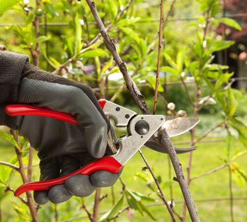 Tree Pruning-Haines City FL Tree Trimming and Stump Grinding Services-We Offer Tree Trimming Services, Tree Removal, Tree Pruning, Tree Cutting, Residential and Commercial Tree Trimming Services, Storm Damage, Emergency Tree Removal, Land Clearing, Tree Companies, Tree Care Service, Stump Grinding, and we're the Best Tree Trimming Company Near You Guaranteed!