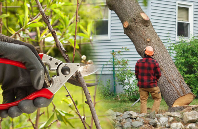Tree pruning & tree removal-Haines City FL Tree Trimming and Stump Grinding Services-We Offer Tree Trimming Services, Tree Removal, Tree Pruning, Tree Cutting, Residential and Commercial Tree Trimming Services, Storm Damage, Emergency Tree Removal, Land Clearing, Tree Companies, Tree Care Service, Stump Grinding, and we're the Best Tree Trimming Company Near You Guaranteed!